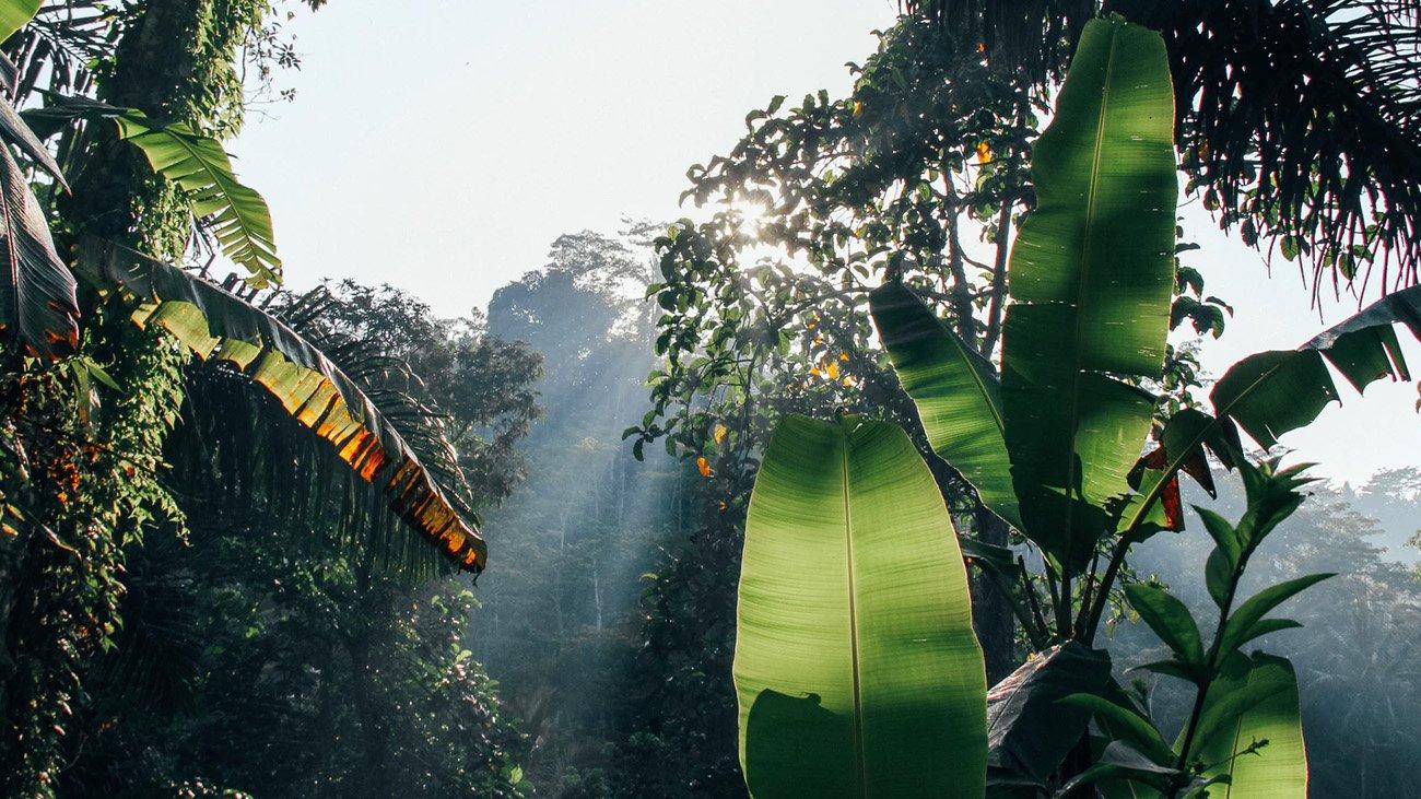 Ubud jungle Bali